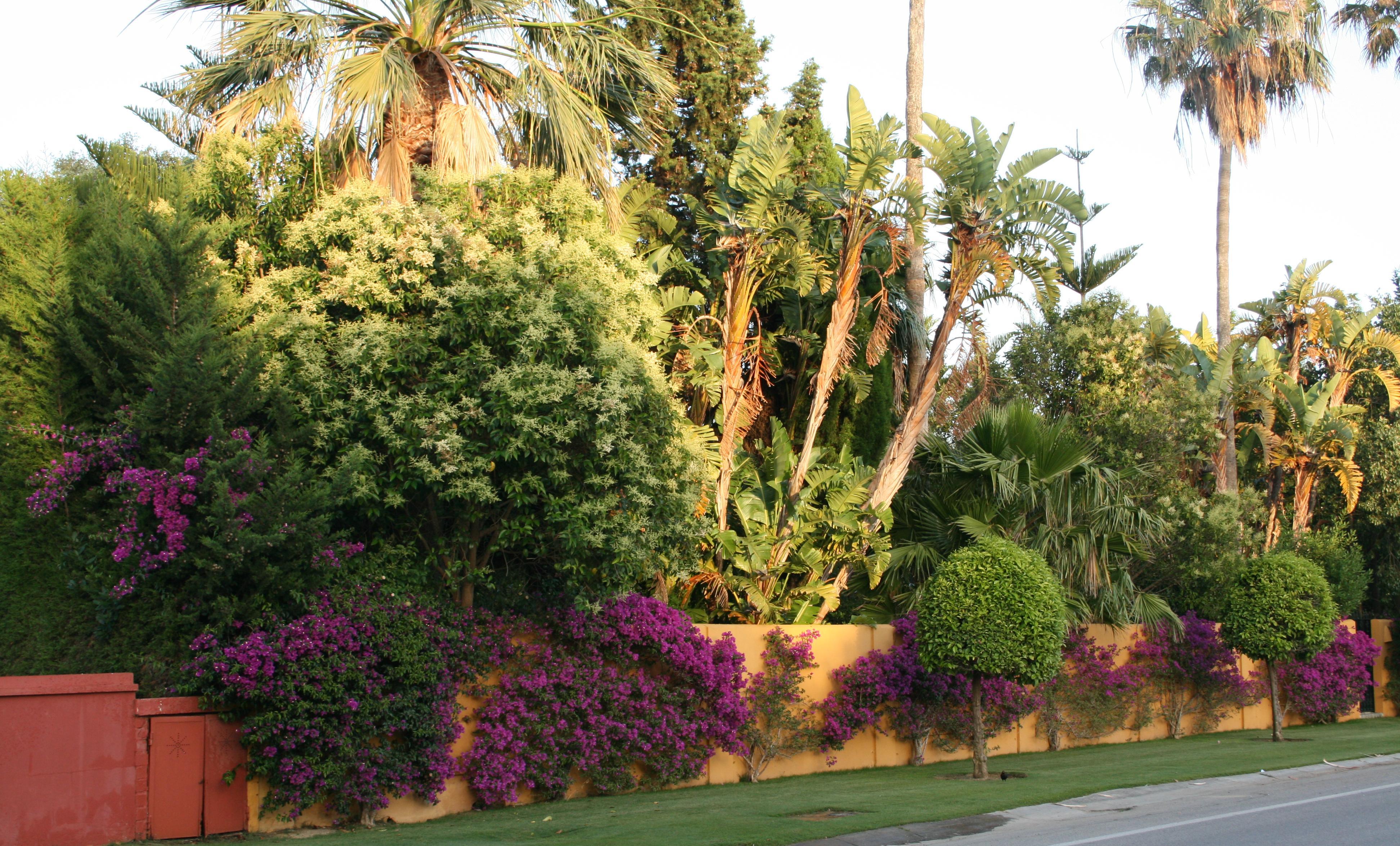 Plantas el blog de fiore - La buganvilla ...